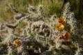 Cholla Cactus Close-up